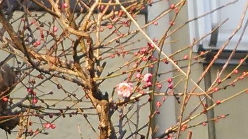 季節は春??? - 1