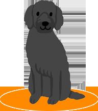 動物医療保険の必要性について