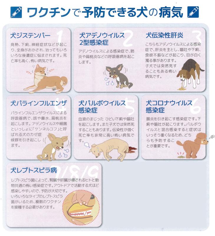 症状 ウイルス 犬 コロナ 犬に新型コロナウイルスは感染する?新型コロナウイルスについて犬の飼い主さんが知っておくべきこととは