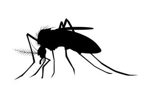 フィラリアにかかっているワンちゃんの血を蚊が吸います。