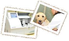 設備・診療中の犬