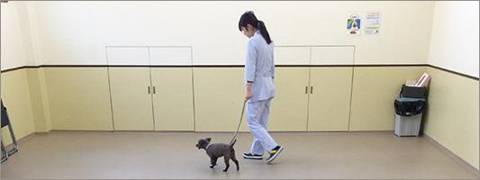 2Fのトレーニングルームでお散歩ができます